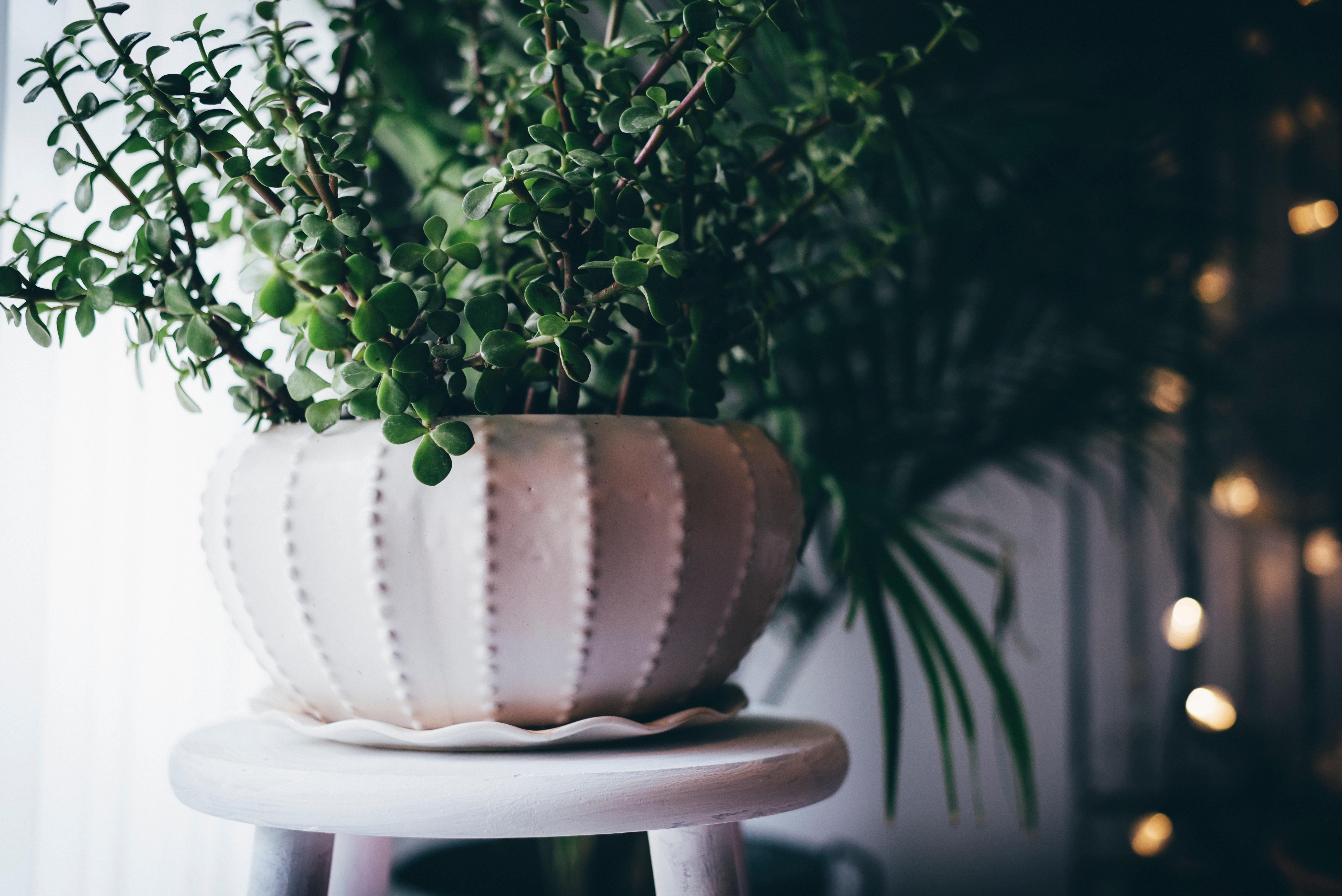 indoor-plant